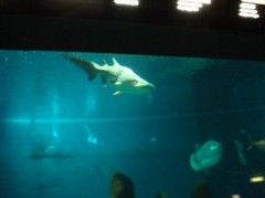 foto squali.jpg