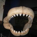 foto squali acquario genova